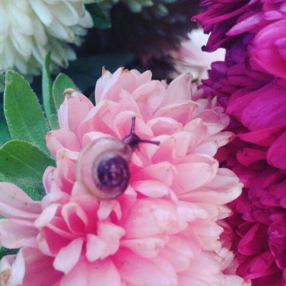 Snail on flower.....
