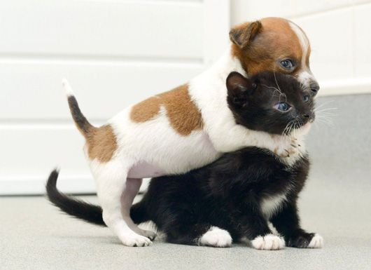 2 Abandoned Pets Become Unlikely Best Friends: