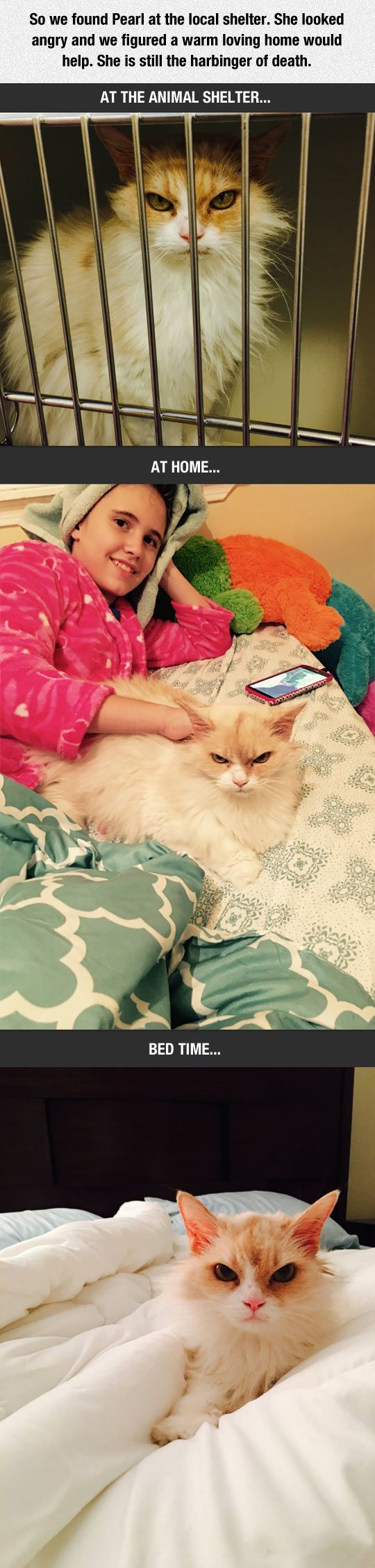 Angry Cat Gets Rescued :D this cat have the best face ever!