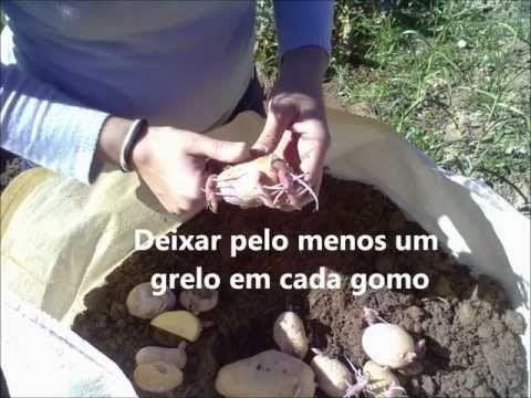 Cultivo de papas en una bolsa