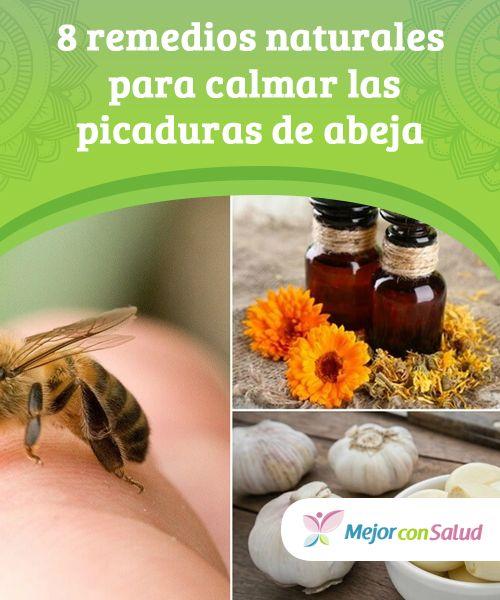 8 Remedios Caseros Para Curar Las Picaduras De Abeja Mejor Con Salud Remedios Naturales Picaduras Remedios