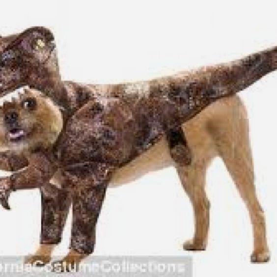 Best puppy costume ever!!!