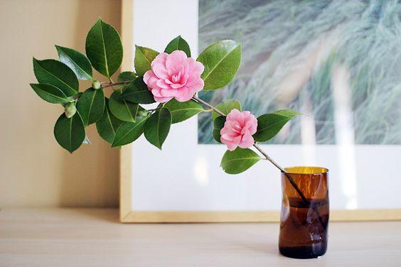 camellias | elephantine