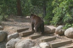 Yup, we have bears in town! This is a photo taken from our bedroom window.