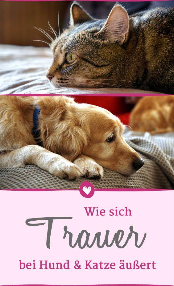 Hund Und Katze Trauern Auf Sehr Unterschiedliche Weise Wenn Ihre Bezugspersonen Nicht Mehr Da Sind Haustiere Hund Und Katze Katzen Haustiere
