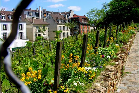 On the Parisian slopes of Montmartre, the Clos Montmartre is one of the most unusual places of the district. With a production of just under 2,000 bottles per year, Montmartre wine given every first Sunday of October in festive and popular harvest. © Bernard Fosse