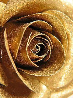 single gold rose ~