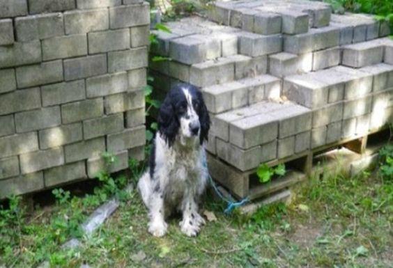 Teneri cuccioli Notizie: La cagnolina cieca abbandonata e legata a una pila...