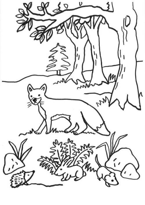 Fuchse Fuchs Igel Hase Und Maus Zum Ausmalen Ausmalen Elch Kunst Ausmalbild