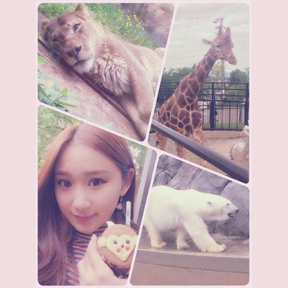 "mayumi on Twitter: "" 旭山動物園\(o)/ ライオンが可愛すぎた #travel https://t.co/OogFCT8Lvu"
