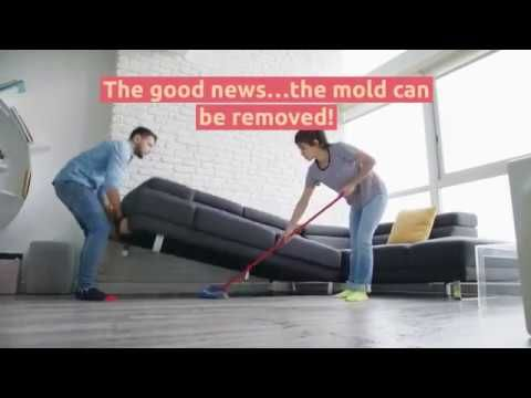 Mold Removal And Remediation In 2020 How To Remove Mold Remover Crawl Space Encapsulation