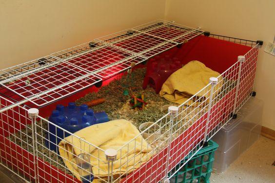 guinea pig pens do it yourself guinea pigs pinterest