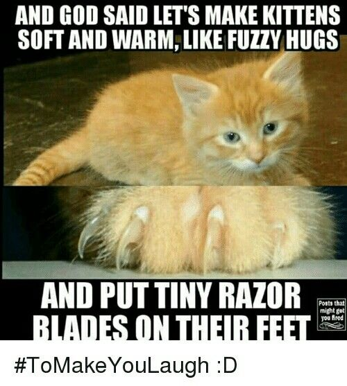 Pin By Molly Parton On Funny Baby Animals Funny Kittens Cute Cat Gif