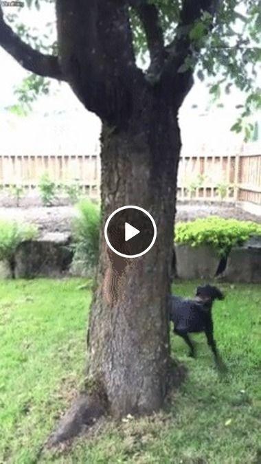 Cachorro perseguindo á sua presa!