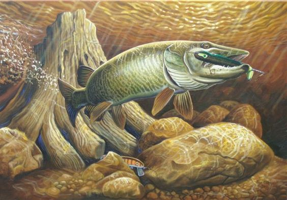 """Big Chip Muskellunge"" with Musky Hunter Magazine 2015 collectible lure, Pacemaker."
