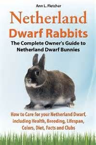 netherland dwarf rabbits colors - Bing Images