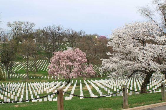Spring at Arlington Cemetery