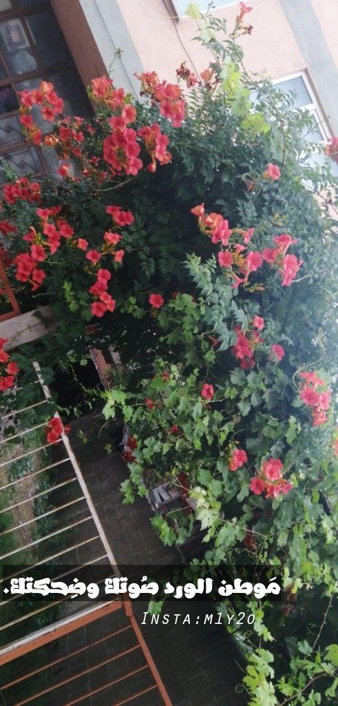 شات الحب دردشه الحب شات الحب الكتابي شات الحب للجوال Plants