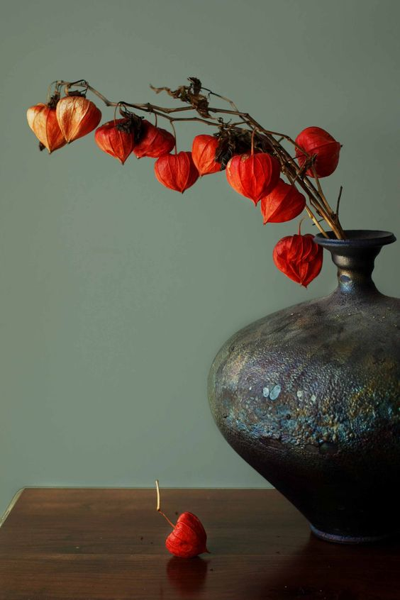 Chinese Lantern, Physalis Alkekengi www.HomeSownGardens.com
