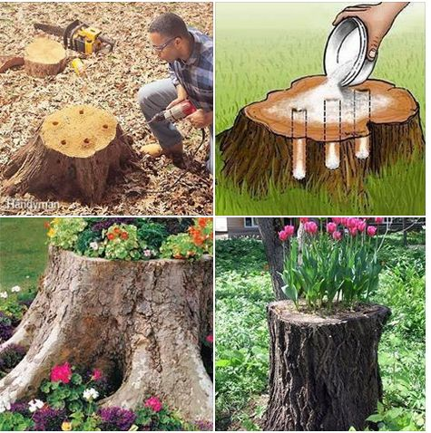 Trees Creative And Ideas On Pinterest