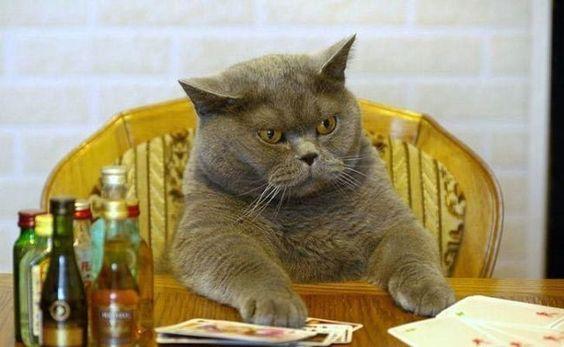 31 απίστευτες φωτογραφίες που δείχνουν πόσο αστείες είναι οι γάτες (Μέρος 1ο)