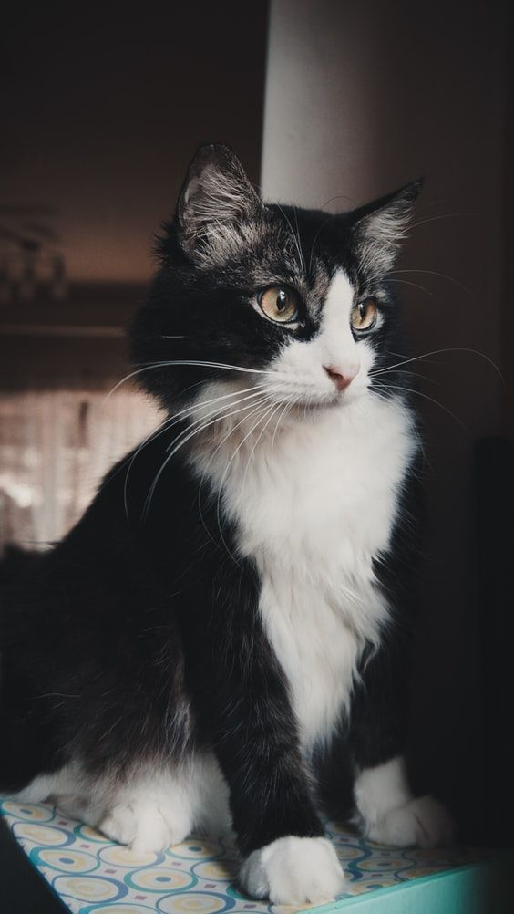 Black White Cat With Fabulous Eyes In 2020 White Tabby Cat Orange Tabby Cats