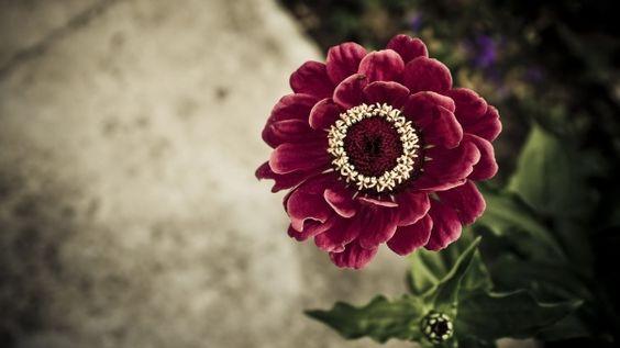 и цветок, лепестки, стебель