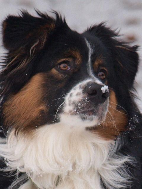 Cutest dog I think I have ever seen...Noah.