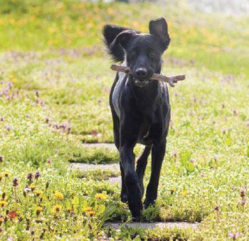 Natural treatment for degenerative joint disease | Animal Wellness
