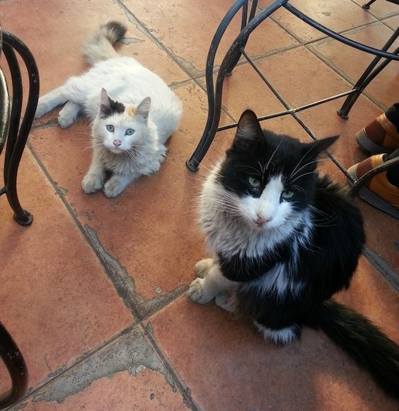 Die Straßenkatzen aus Marrakesch brauchen Namen | VICE | Deutschland