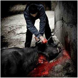 PHOTO HELL - Defending Animals Online