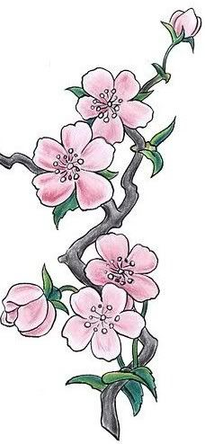Cherry Blossom Tattoo Photo:  This Photo was uploaded by pindak. Find other Cherry Blossom Tattoo pictures and photos or upload your own with Photobucket...
