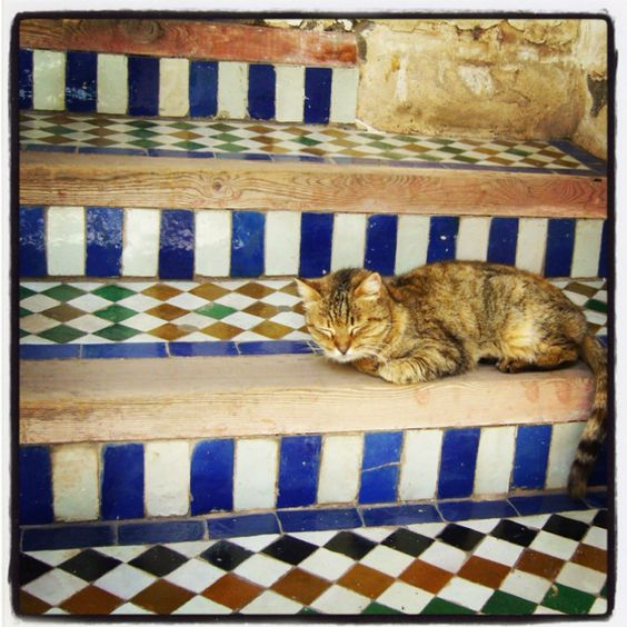Tiled steps, a tabby cat with orange bits, Marrakech.....what more could I want?