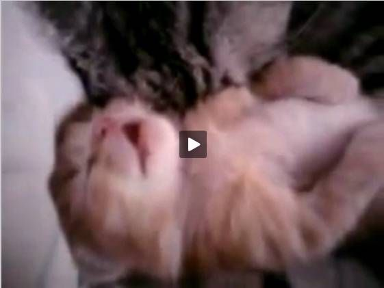 http://www.wimp.com/stopnightmare/  Kitten dreaming.