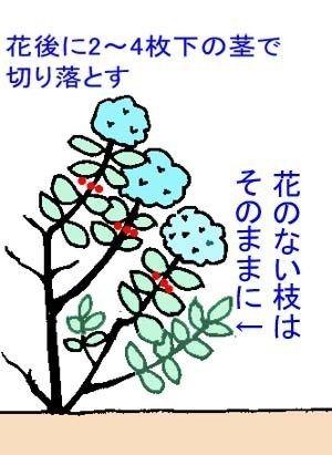 アジサイの剪定方法 アジサイの育て方 Net 画像あり 紫陽花 剪定 剪定 アジサイ