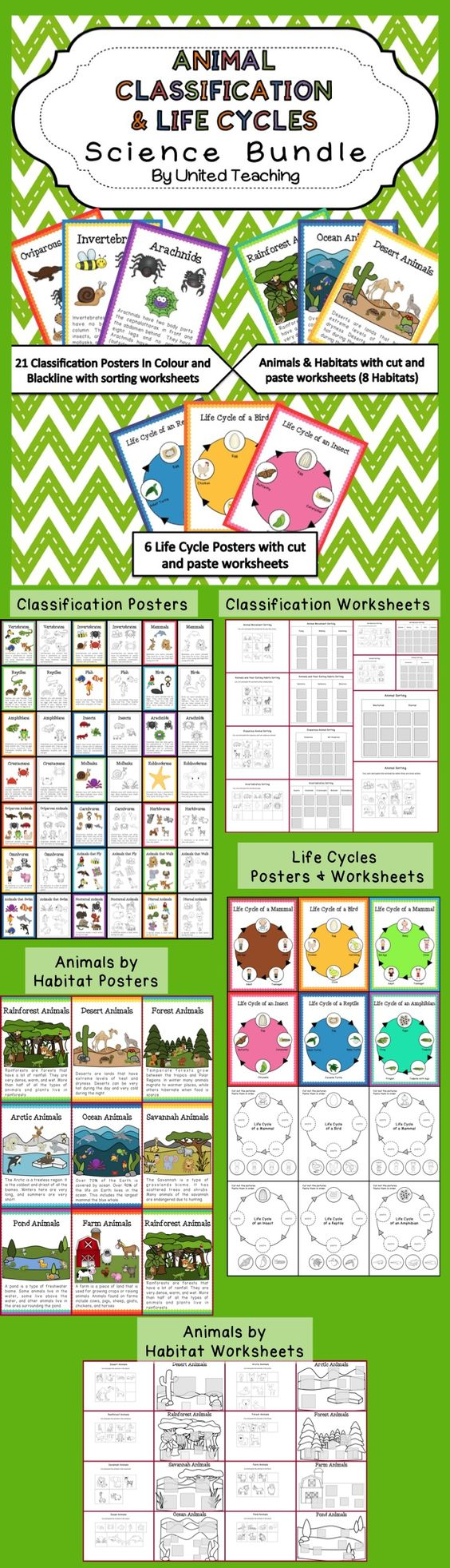 animal classification coloring worksheets and life cycles on pinterest. Black Bedroom Furniture Sets. Home Design Ideas