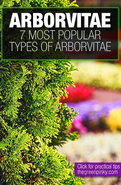 2bddd03fd89fb1974b95efce1e67aaa9 - Types Of Gardens And Their Characteristics