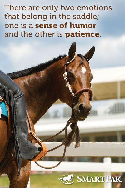 Isn't that the truth!: Horse Quotes, Equestrian Quotes, Horse Stuff, Horses, Horse Riding Quotes, So True, Horsey Quotes, Horsey Stuff