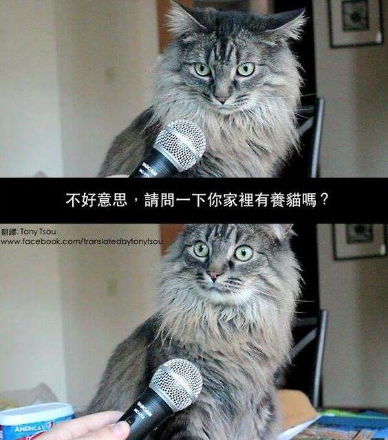【情報】繼台灣記者訪問牛之後,香港近日也出現了類似事件 @歡樂惡搞 KUSO 哈啦板 - 巴哈姆特