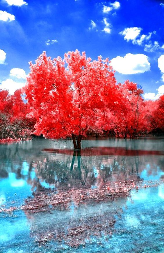 Boost Your Sales Elegantbydesign Presents Promote Your Business Promote Your Business Is Beautiful Nature Beautiful Landscapes Nature Photography