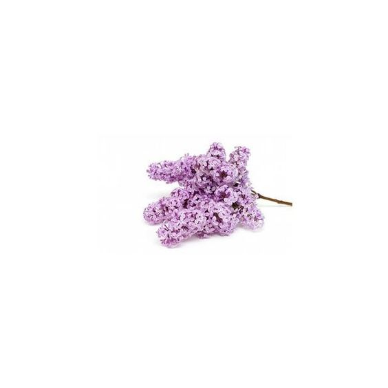 Яндекс.Картинки ❤ liked on Polyvore featuring flowers and purple flower