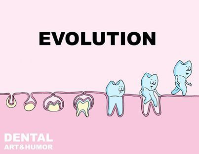 the development of the theory of evolution Charles darwin's theory of evolution is generally believed by the scientific community and general public to be a solid scientific theory that explains the origin and development of life on earth over millions of years.