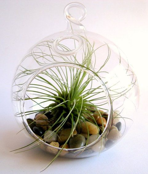 Hanging glass ball shape terrarium (X- Large size) (8 inches)  (Ea).  (Item # GCH101/07)