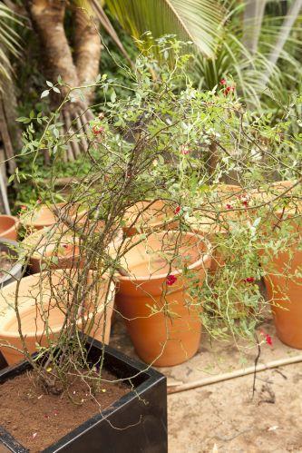 A planta ficará sem apoio, por isso, cuidado para não danificá-la<BR><BR>