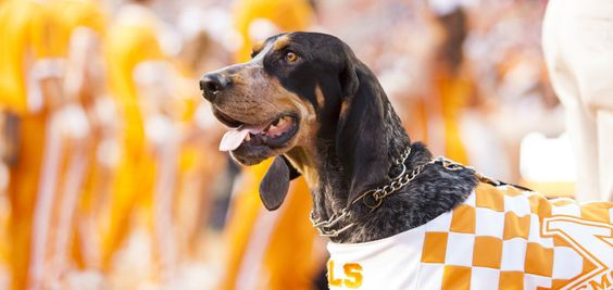 Smokey Named Top Live Mascot---We have the top live mascot, the top fight song, the fifth largest college football stadium in the nation, fourth ranked recruitment class, best game atmosphere, and the best NFL quarterback.  Yeah----I would say we are the bomb.  #VOLS #VFL
