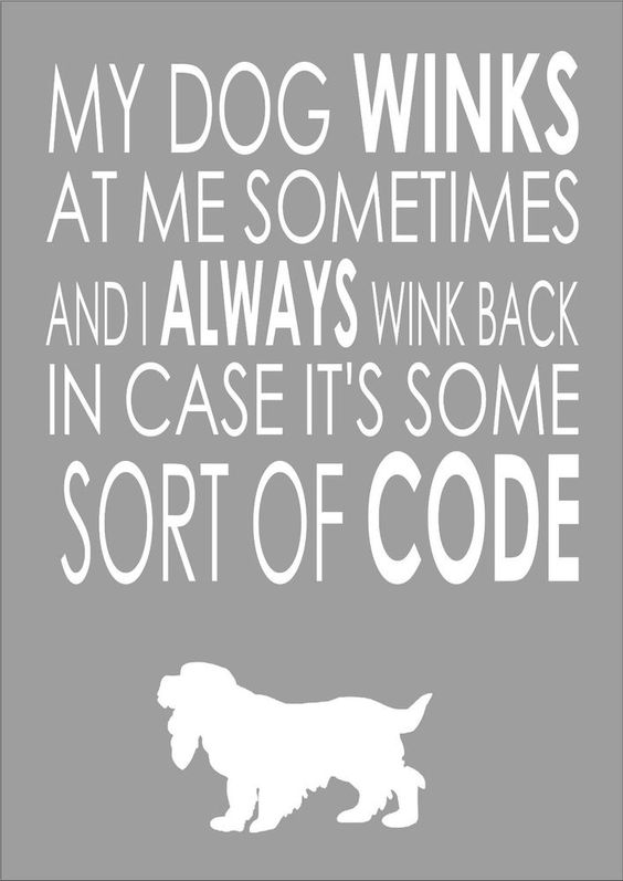 A Lovely Cocker Spaniel - My Dog Winks At Me Sometimes Cocker Spaniel - Word Wall Art Typography Quote Dog