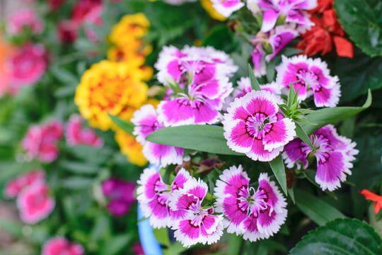 Epingle Sur Jardin Potager Aromatique Bio