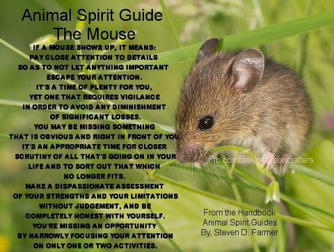 Animal Spirit Guide : The Mouse: