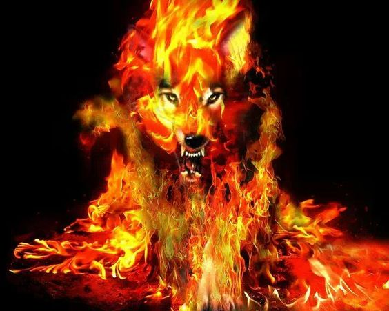 elemental fire wolf | wolves | Pinterest | Wolves and Fire