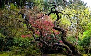 curvo, jardín, árbol, Japonés
